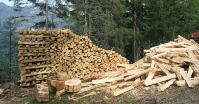 Wood biomass