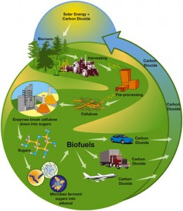 Biomass usage example: production of biofuels.