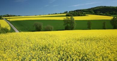 Biofuels main