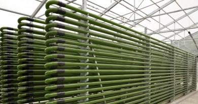 Algae Biofuel Production